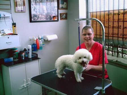 Dog Grooming Woodstock Ontario